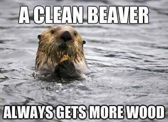 cleanbeaver