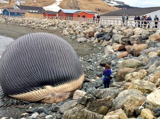 whaleshit