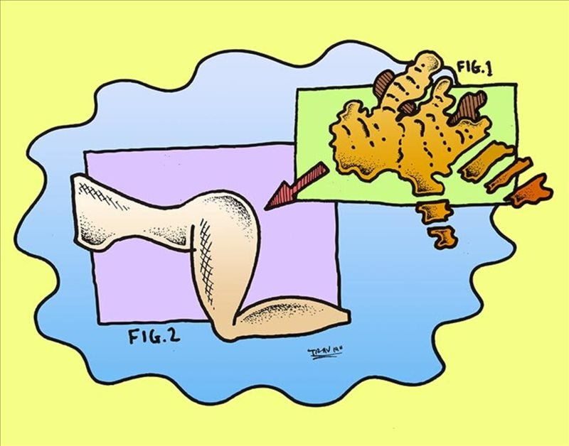 ginger figging