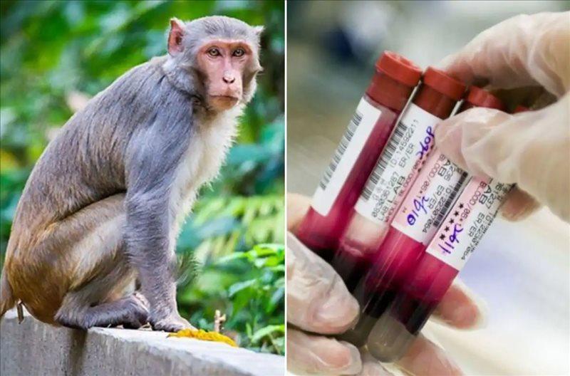 monkey virus