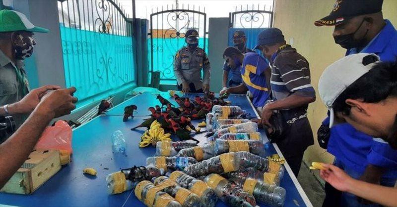 Parrot Bottles